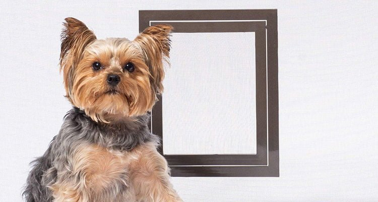 Best Screen Door For Dogs