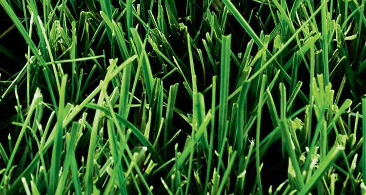 Best Grass Seed For Clay Soil