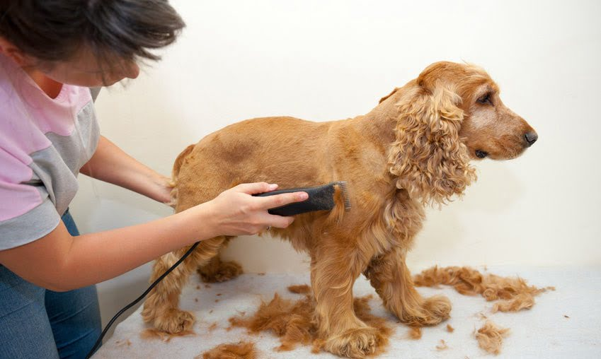 best-dog-grooming-clippers-2020-sportingclays